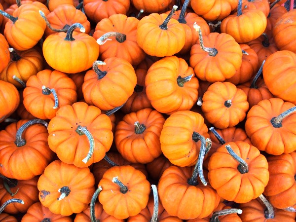 Pumpkins Overload